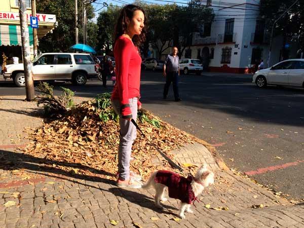 paseo-animales
