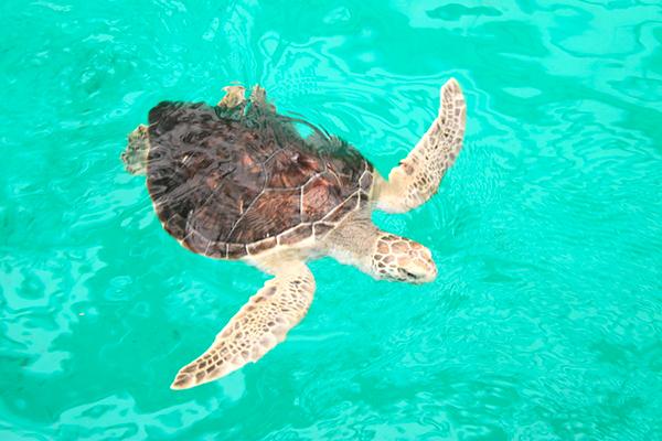 mazunte-tortugas-ok