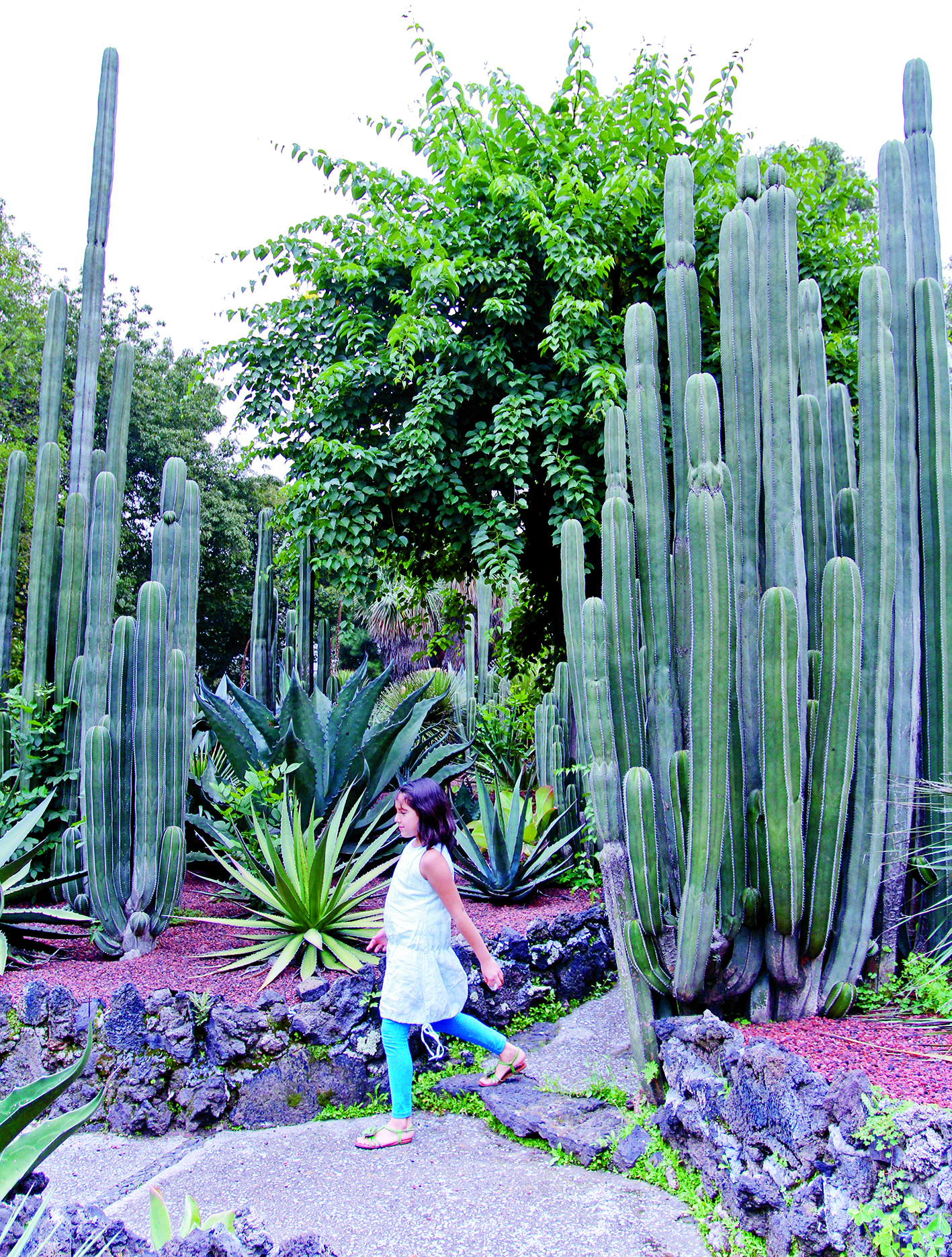 MÉXICO, D.F., 04AGOSTO2012.- Familias acuden en este periodo vacacional al Jardín Botánico de la UNAM, donde aprenden a relacionarse con la naturaleza, además de algunos talleres artísticos. FOTO: ISAAC ESQUIVEL /CUARTOSCURO.COM