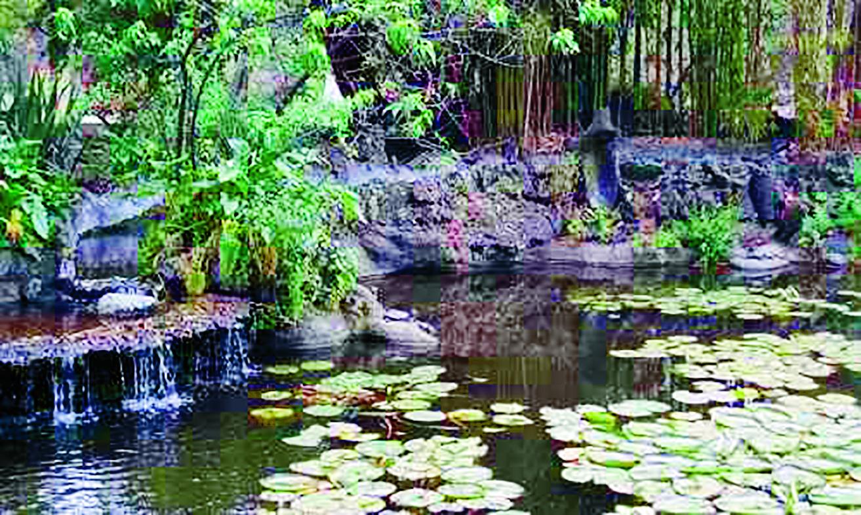 Jardín Botánico UNAM