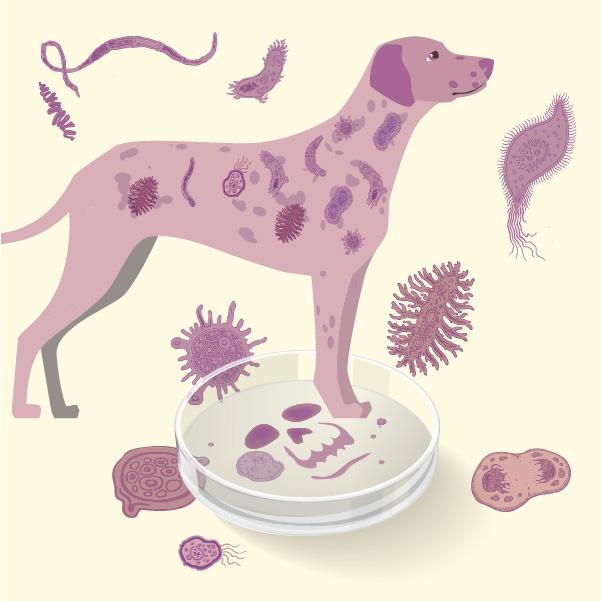 cryptosporidium en perros