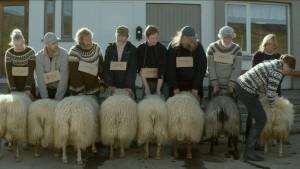 el-cine-islandes-tambien-arrasa-en-la-seminci-con-rams-el-valle-de-los-carneros