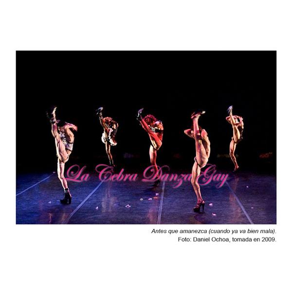 cebra-danza