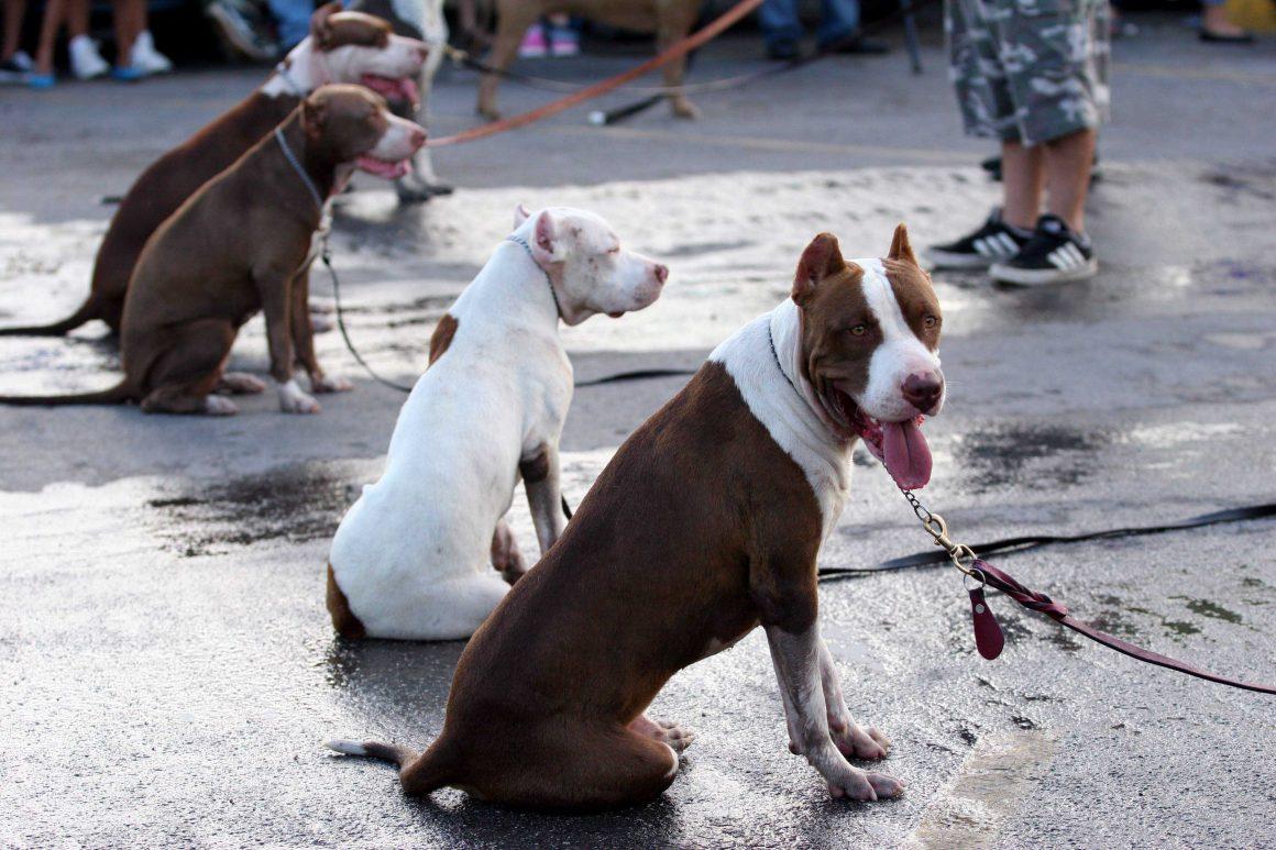 CANCUN, QUINTANA ROO, 25JULIO2010.- Se realizó el primer festival canino que organizo un tienda departamental y asociaciones en favor de los animales para crear conciencia de la adopcion de  perros y gatos asi como la esterilizacion en donde articiparon todo tipo de personas con sus mascotas FOTO: AMARANTA PRIETO/CUARTOSCURO.COM