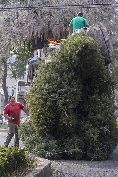 MÉXICO, D.F., 11ENERO2014.- Trabajadores de limpia de la ciudad de México recogen árboles de Navidad abandonados en la calle, parta llevarlos a los centros de acopio en la delegaciones. FOTO: CUARTOSCURO.COM