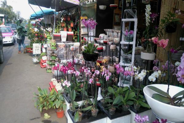 Flores Y Plantas Las Del Mercado De Nativitas Maspormas