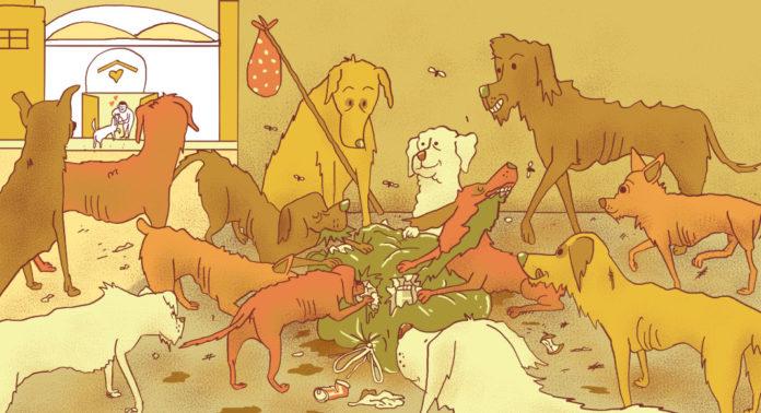 Sobrepoblación de perros en la CDM
