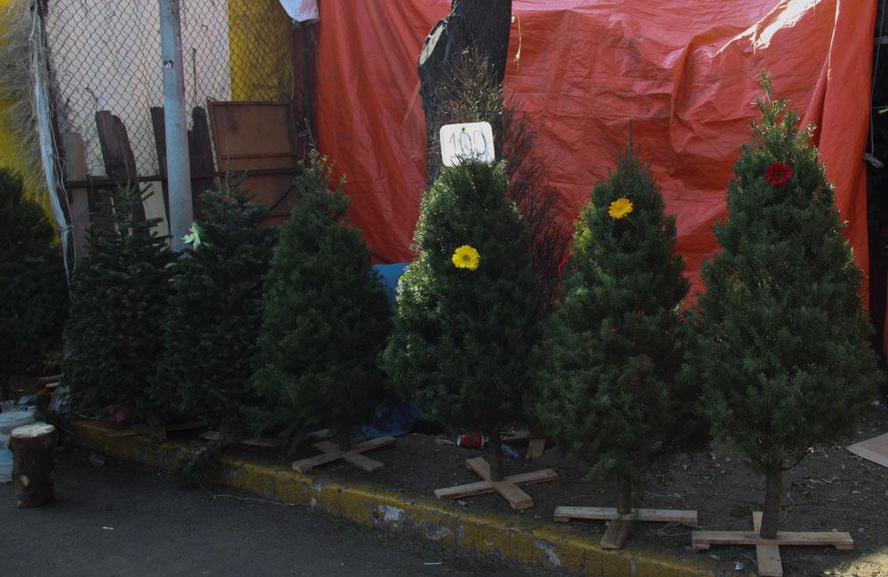 Donde Comprar Arboles De Navidad En Ciudad De Mexico