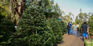 Dónde comprar árboles de Navidad