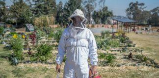 extinción de las abejas