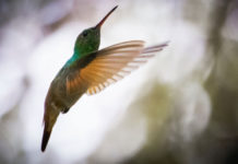 colibríes en CDMX