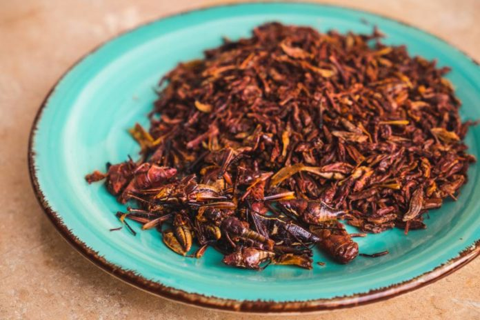 Festín de Insectos Comestibles